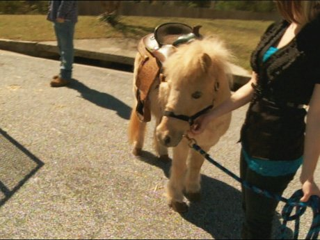 La La and Melo's gift to Kiyan: a real pony.