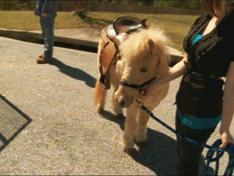 La La and Melo's gift to Kiyan: a real pony.